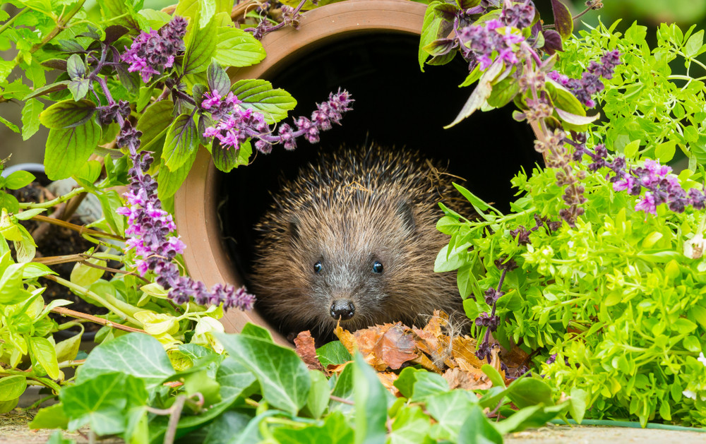 Wildlife-to-look-out-for-in-your-garden