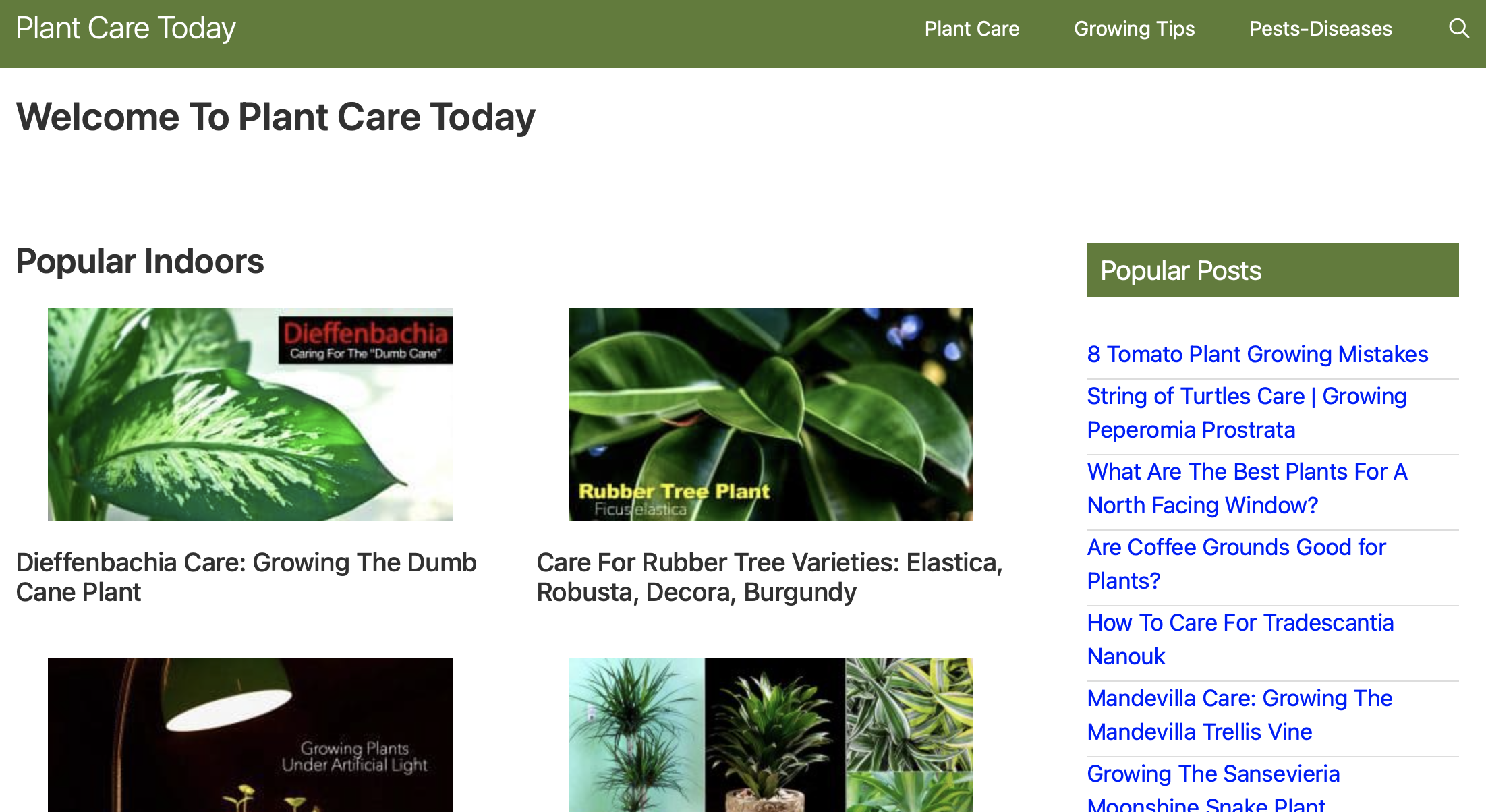 Plant Care Today