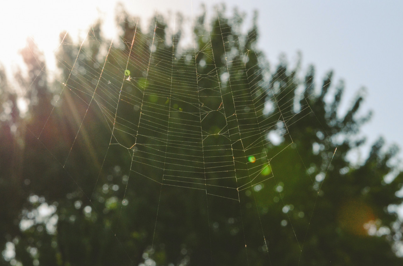How-To-Stop-Spider-Webs-On-Outdoor-Furniture