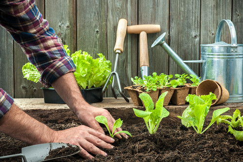 vegetables-you-can-easily-grow-in-your-small-English-garden