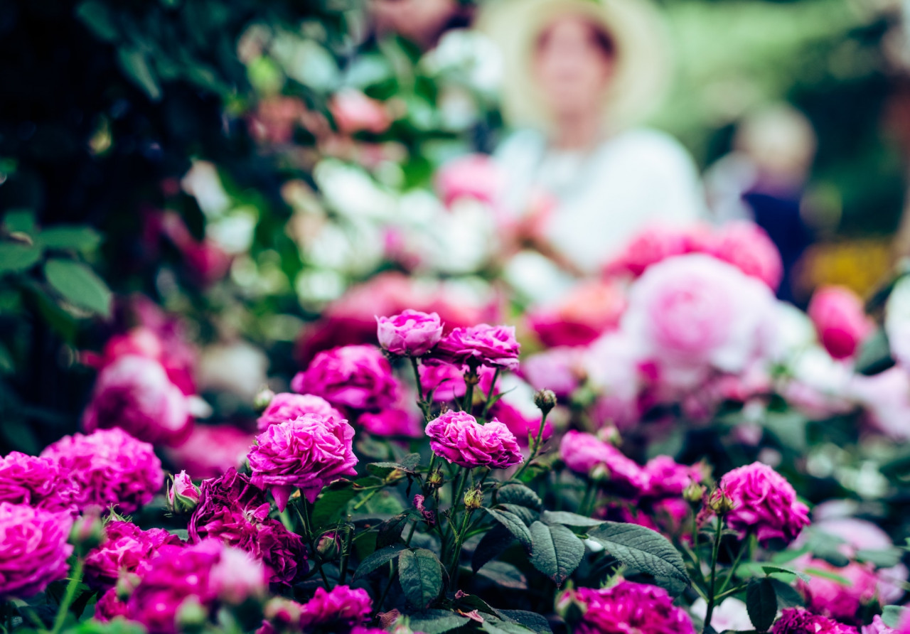 RHS-Chelsea-Flower-Show